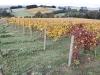 vineyards-in-autumn-15