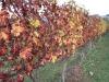 vineyards-in-autumn-27