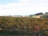 vineyards-in-autumn-4