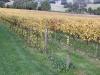 vineyards-in-autumn-40