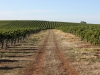 Holymount Estate Vineyards