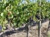 Red Kangaroo Winery