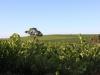 IMG_Red Kangaroo Winery